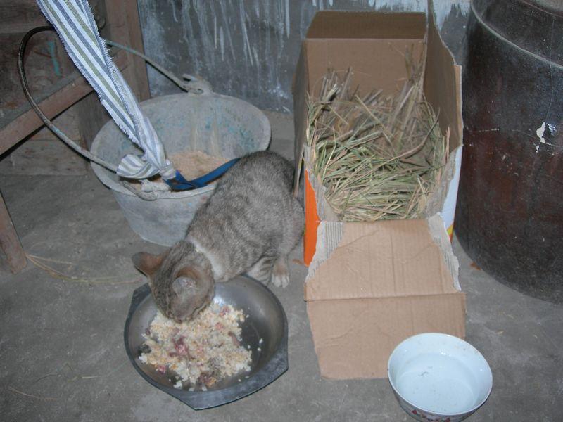 小猫吃饭中.jpg