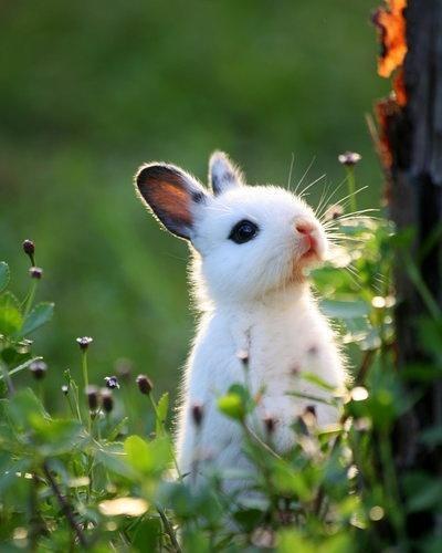 小兔子乖乖.JPG