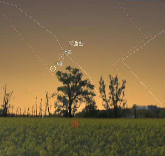 水合木-20110317.JPG